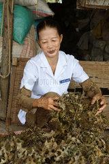 Vietnam  trocknen von Heilkraeutern