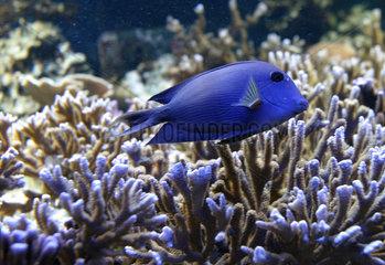 Burg auf Fehmarn  Fisch im Aquarium