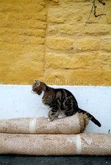 Hauskatze im Freien