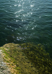 Sunlight glistening on surface of water and algae covered rock