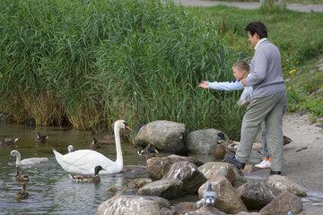 Enten und Schwaene werden gefuettert