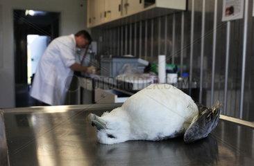 Eissturmvogel-Monitoring zur Kunststoffbelastung der Nordsee