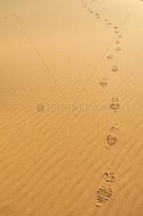 Fussspuren in der marokkanischen Wueste