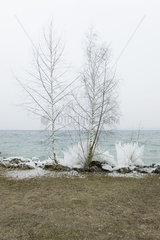 Water's edge in winter