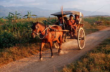 Myanmar: Pferdekusche als taegliches Transportmittel