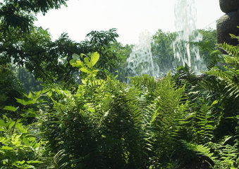 Vegetation  water fountains in background