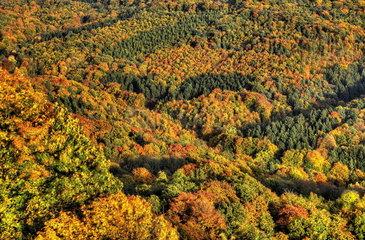 Siebengebirge im Herbst