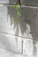 Weed growing out from crack in wall