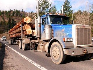 Holztransport: Truck mit Baumstaemmen