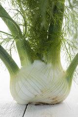 Fresh fennel bulb  close-up