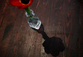 Berlin  Deutschland  eine Tulpe als Tischdekoration in einem Restaurant