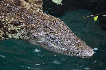 Crocodile - Zoo Hagenbecks Tierpark Hamburg
