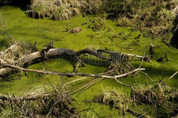 Biberach  Landschaftsschutzgebiet