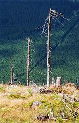 Waldsterben auf dem Wurmberg im Harz