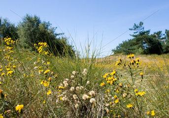 Neuhaus  Wildblumen auf einer Waldwiese