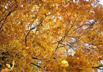 Berlin  sonniger Herbsttag