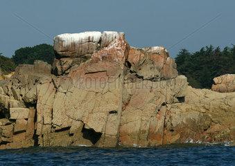 Ile de Brehat  Brittany  France  coastal rock face