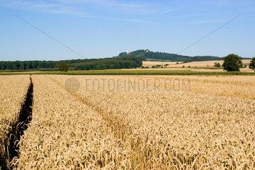 Riedlingen  Blick ueber ein Getreidefeld