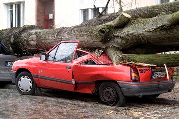 Berlin  Sturmschaden nach Orkan Kyrill