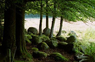 Wald bei Kivik  Schweden