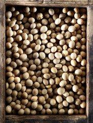 Soybean grain