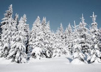 Verschneiter Thueringer Winterwald