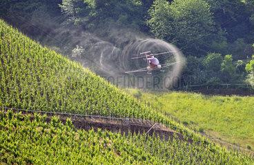 Moselwein: Mit Hubschrauber und Pflanzschutzmittel gegen Pilzbefall