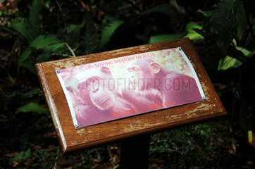SIERRA LEONE-CHIMPANZEE-SANCTUARY