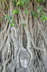 Thailand: Buddhafigur aus Sandstein in Wurzelgeflecht verwachsen
