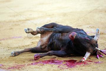 Sevilla  Spanien  ein toter Stier