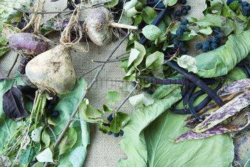 Assortment of vegetables on burlap