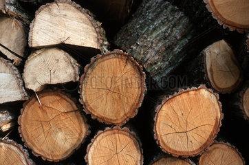Forstwirtschaft  Fichtenstaemme