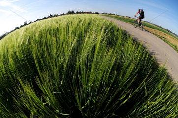Radfahrer auf Feldweg