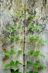 Junger Pflanzentrieb vor einer alten Wand