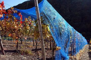 Weinbau an der Ahr