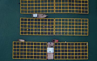 CHINA-FUJIAN-LIANJIANG-ABALONE BREEDING (CN)
