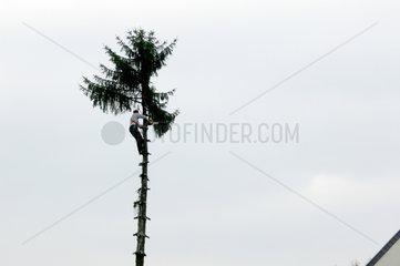 Baumarbeiter in Bonn Beuel