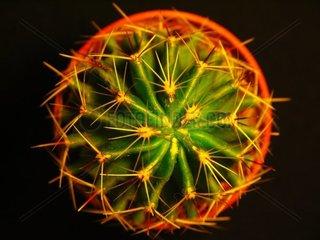 Ansicht eines Kaktus von Oben