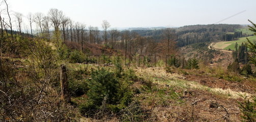Forst des Grafen von Hatzfeldt