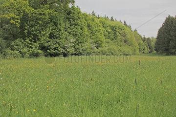 Fruehlingslandschaft in Oberfranken