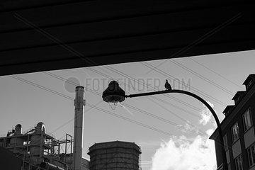 Taube auf Strassenlaterne