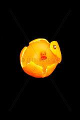 Luftballon Mandarine