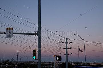 Vogelschwaerme an einer Kreuzung in der Daemmerung