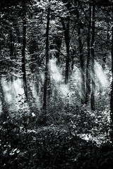 Sonnenstrahlen erhellen den Wald