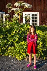 Kleines Maedchen steht vor einer Baerenklaupflanze