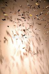 Illusion vom Fliegen