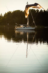 Moewe fliegt ueber vertaeutes Segelboot