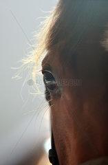 Neuenhagen  Deutschland  Detailaufnahme  Augenpartie eines Pferdes