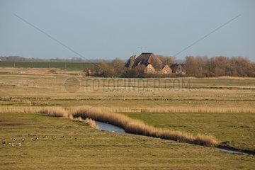 Nordfriesische Landschaft auf Eiderstedt