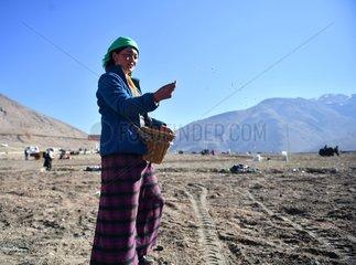 CHINA-TIBET-XIGAZE-FARMING (CN)